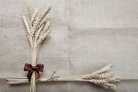 Ears of wheat on the canvas. Stock Photo