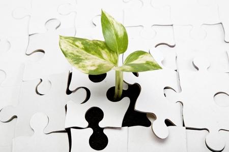 replant: Verde germoglio dalla terra si fa strada attraverso il puzzle.