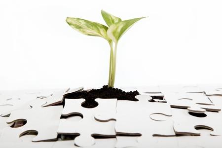從地球綠豆芽做它的方式通過了這個難題。