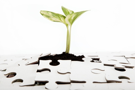 Green sprout from the earth makes its way through the puzzle. Stock Photo