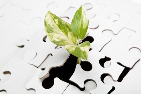 sustentabilidad: Brote verde de la tierra se abre paso a trav�s del puzzle. Foto de archivo