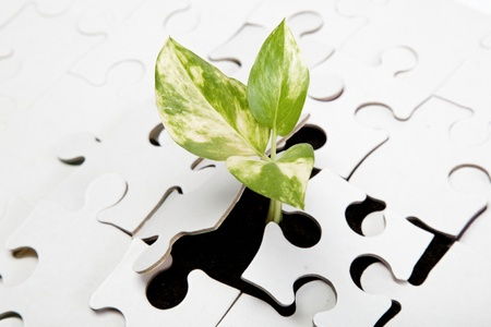 Green sprout from the earth makes its way through the puzzle. Reklamní fotografie