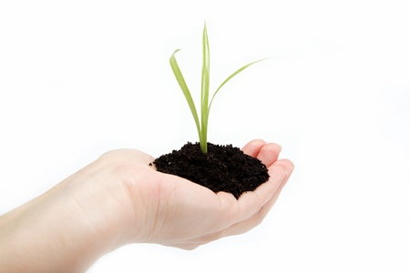 sustain: Womans hand with a green sprout in the ground on a white background. Stock Photo