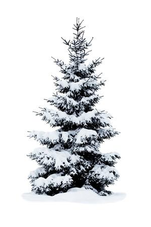 聖誕樹雪覆蓋在白色背景孤立。