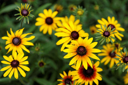 sunflower. yellow flower on a green background. Stock Photo - 16551853
