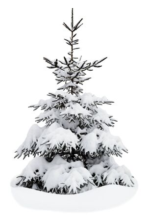 Christmas tree on a white background Stock Photo - 16686482