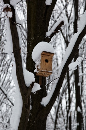 Birdhouse in a tree in the snow. Winter. Stock Photo - 17512550