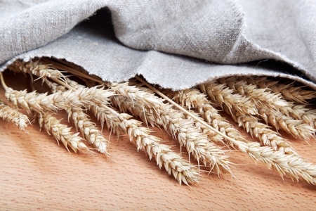 burlap background: Ears of wheat under the canvas on a wooden board. Stock Photo