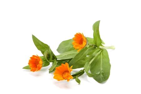 Marigold flowers isolated on white background. Stock Photo - 19457574