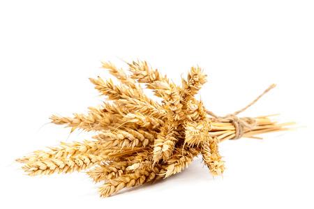 cosecha de trigo: Gavilla de espigas aisladas sobre fondo blanco. Foto de archivo