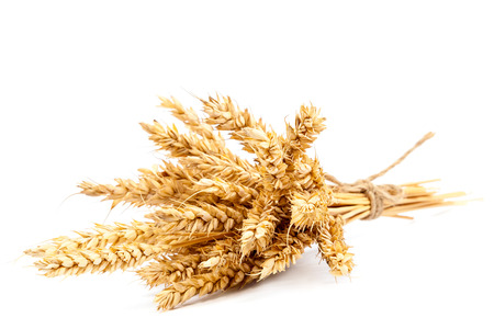 grain: Sheaf of wheat ears isolated on white background.