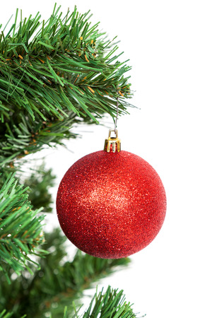 winter trees: Red ball on the branch of a Christmas tree, isolated on white background.