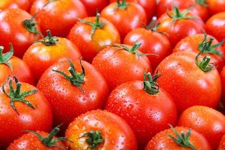 背景として露の滴で新鮮なトマトです。