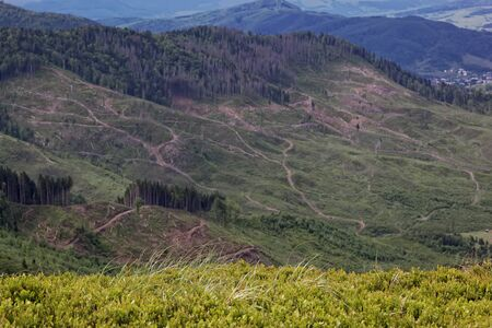 tree felling: Tree felling on the mountain expanses. Mountain landscape.