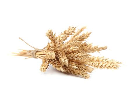 beardless: Sheaf of wheat ears isolated on white background.
