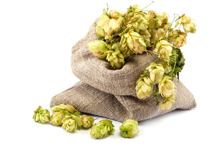 Hops in a canvas sack isolated on white background.