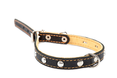 Leather belt collar isolated on a white background.