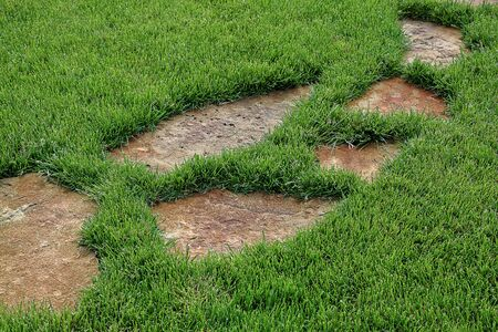 stone path: Stone path in green grass as a background.