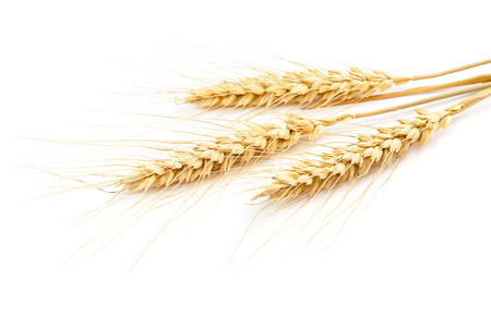 wheat background: Sheaf of wheat ears isolated on white background.