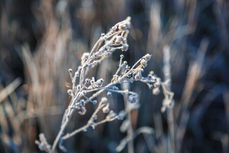 Autumn leaves and grass with hoarfrost frosty sunny morning as a background. Stock Photo