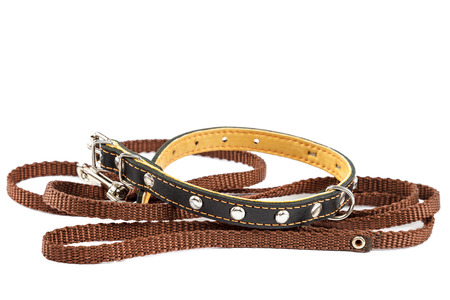 Doggy leather belt collar leash isolated on white background.