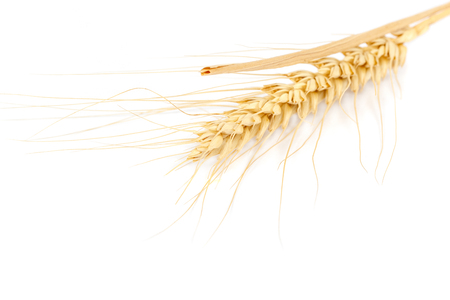 Wheat ear isolated on white background.