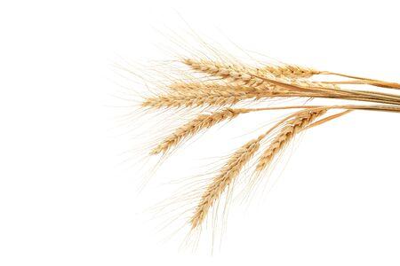 Garbe Weizenähren isoliert auf weißem Hintergrund.