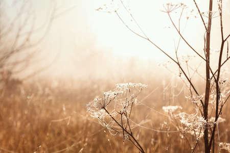 Autumn landscape. Trees, grass, trail, fog, hoarfrost, leaves, water, sunlight