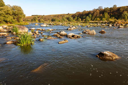 River rapids with stone and trees on the shore.
