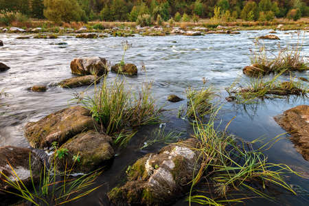 River rapids with stone and trees on the shore. Imagens