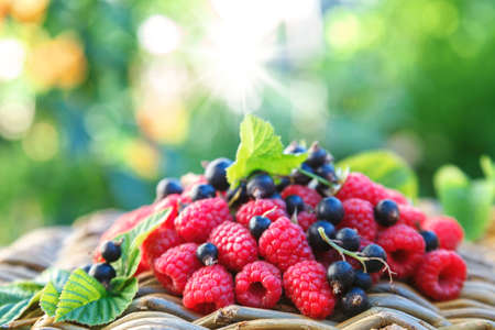 Fresh raspberries and currants in the garden on a sunny day. Standard-Bild