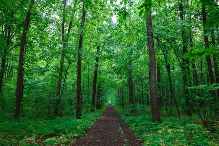 Green spring wet forest with paths and streams.