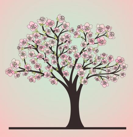 arbol cerezo: Cerezo y flores Vectores