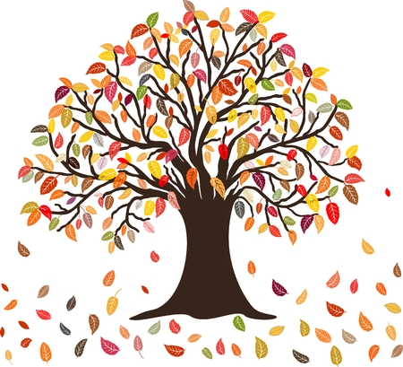 Autumn Tree with the colorful falling leaves, isolated on white Çizim