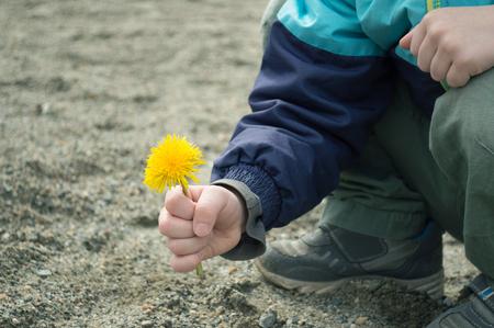 Yellow dandelion in the boy's hand