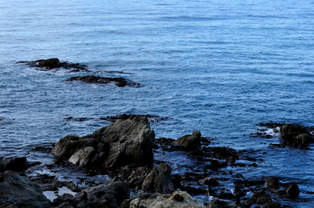 Seals on rocks in Kaikoura, New Zealand