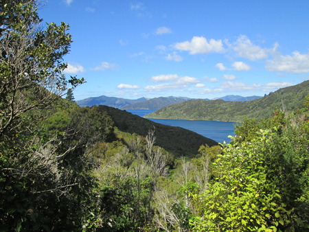 marlborough: View from the Queen Charlotte Track onto the tracks and surrounding nature, New Zealand