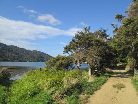 View from the Queen Charlotte Track onto the tracks and surrounding nature, New Zealand