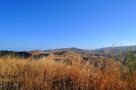 biomasa: Golden crops and fields surrounding Napier in summertime, New Zealand