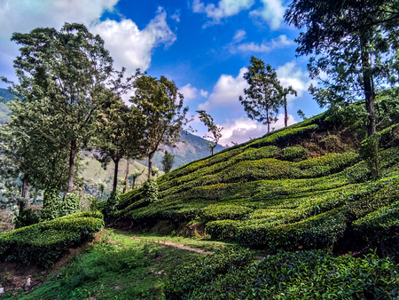 Landscape of the Tea Plantations of Munnar in India Stock Photo