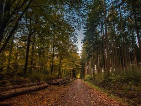 Walkway through a german forest in Autumn