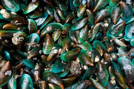 Mussels in Thailand  Seafood market , Mussels background texture Stock fotó