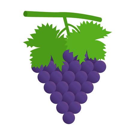 black grape: Flat icon black grape with leaves. Vector illustration.