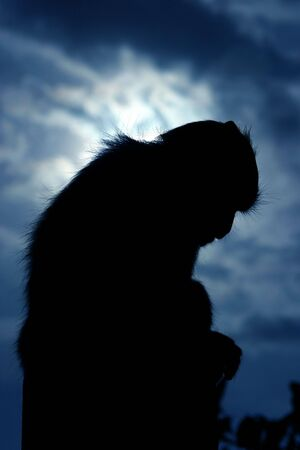 solemn: Solemn monkey blue Stock Photo