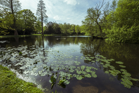 lily pads: Lily pads in a lake in Surrey. Stock Photo