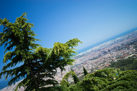 narrow depth of field: A tree overlooking Barcelona with narrow depth of field.