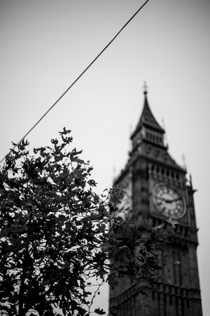 A tree in front of big ben taken with a vintage lens.