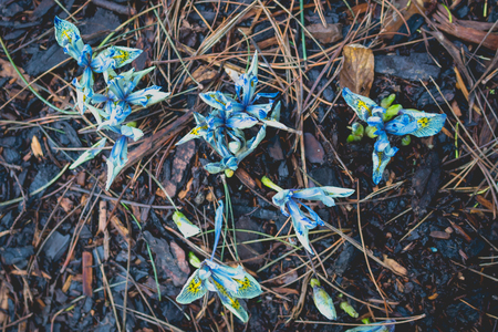 Some brightly coloured flowers in the winter soil.