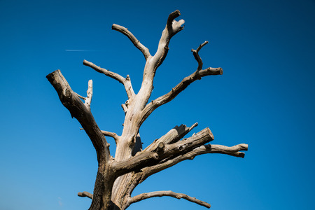 A single bare tree against a summer sky with plane. Reklamní fotografie