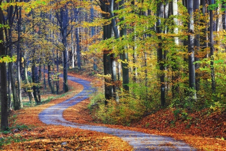 winding road: Winding path through autumn forest